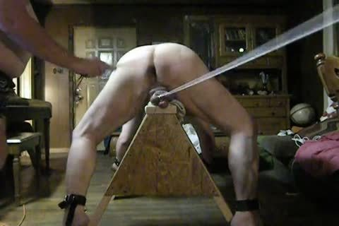 fat Daddy acquire fastened Up On His Sawhorse, Then Spanked And Balls Bashed.