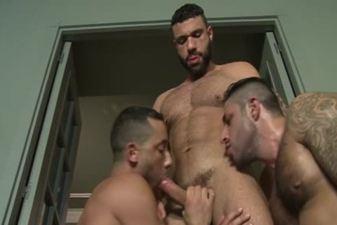 three-some pumped up men Barefuck With cum drinking